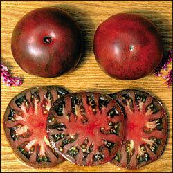 Tomato, Beefsteak, Black from Tula (indeterm)