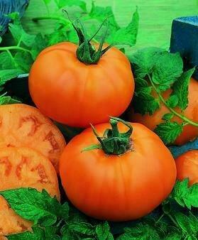 Tomato, Beefsteak, Chef's Choice Orange F1 (indeterm)