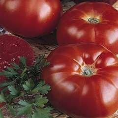 Tomato, Beefsteak, Marmande Paris (semi-determ)
