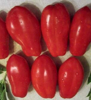 Tomato, Paste/Sauce, French Salsa (indeterm)
