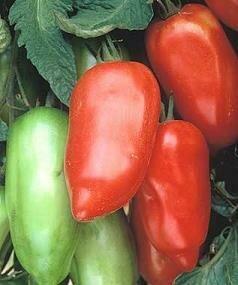 Tomato, Paste/Sauce, Polish Linguisa (indeterm)