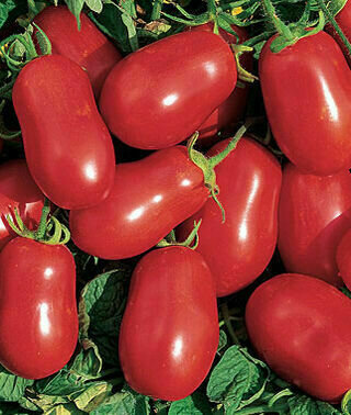 Tomato, Paste/Sauce, Roma (determinate)