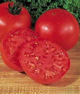 Tomato, Slicer, Burpee's Big Boy (indeterm)
