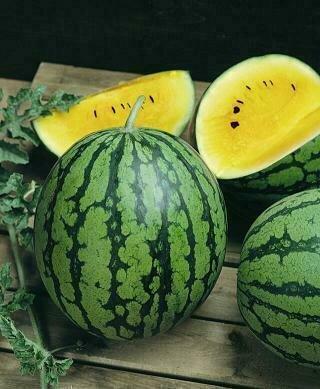 Watermelon, Yellow Doll