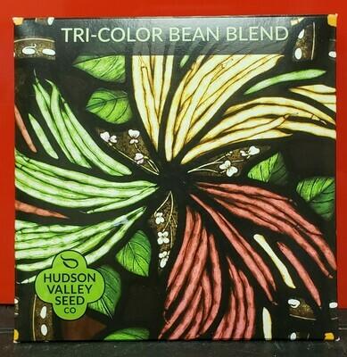 Art Pack Seeds: Bean, Bush (Tricolor Blend)
