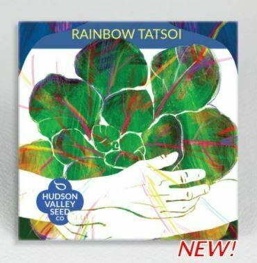 Art Pack Seeds: Tatsoi 'Rainbow'