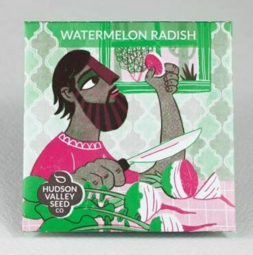 Art Pack Seeds: Radish 'Watermelon'