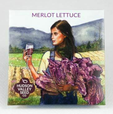 Art Pack Seeds: Lettuce 'Merlot'