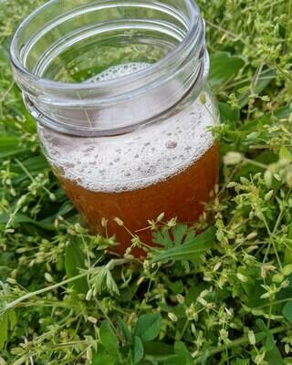 Growler of Down To Earth Kombucha 64oz - burdock root, sarsaparilla, chicory root, birch bark and blackstrap molasses