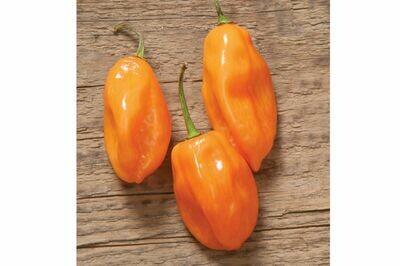 Pepper, Habanero,  plant