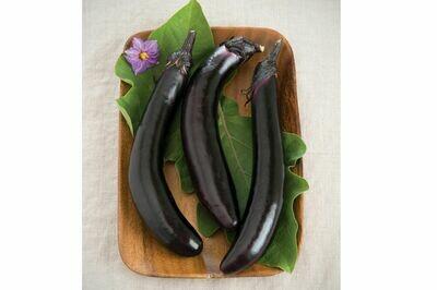 Eggplant, plant