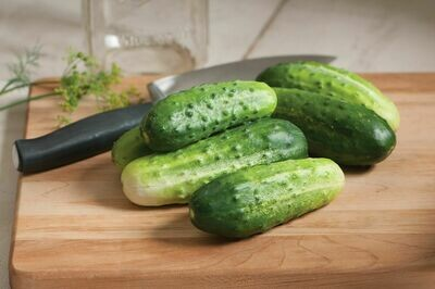 Cucumbers, Pickling, single