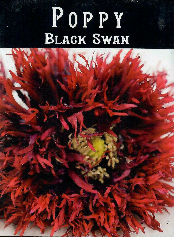Poppy - Black Swan BC