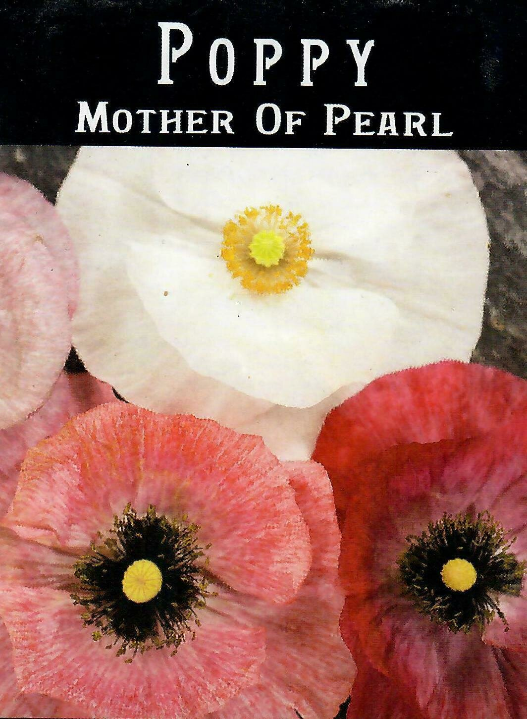 Poppy - Mother of Pearl BC