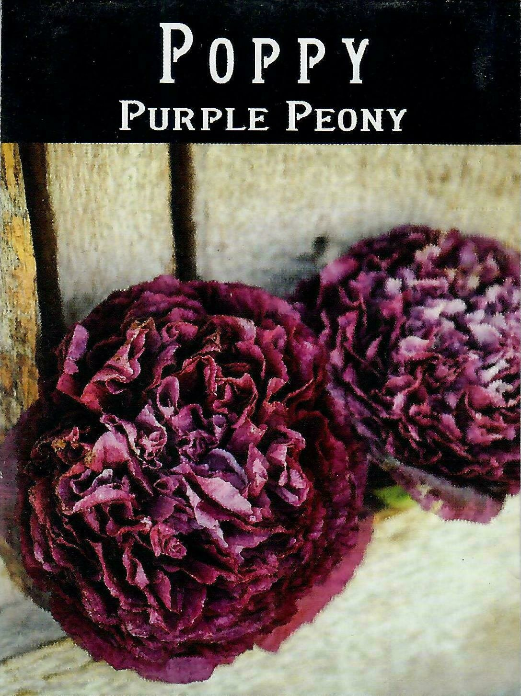 Poppy - Purple Peony BC