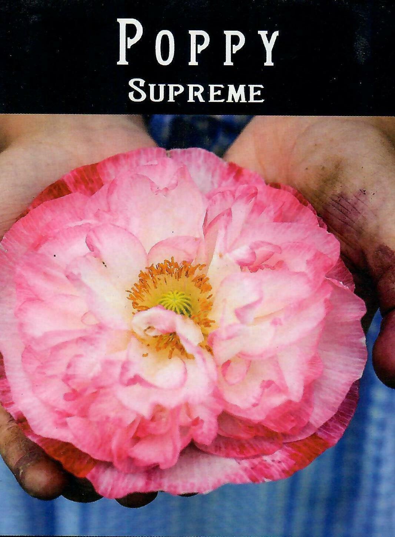Poppy - Supreme BC
