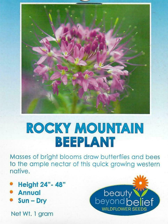 Rocky Mountain Beeplant WF