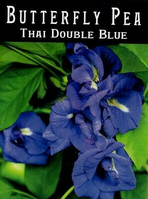 Thai Double Blue Butterfly Pea Seed