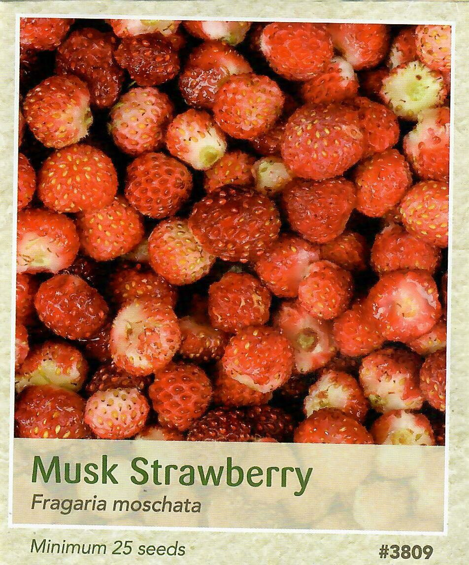 Musk Strawberry Seed