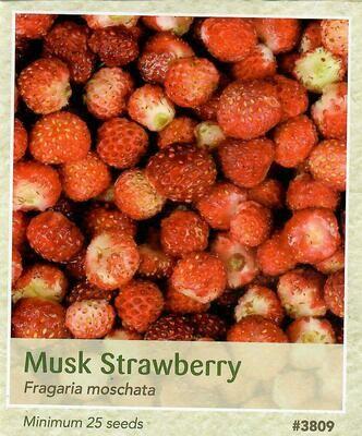 Musk Strawberry Seed