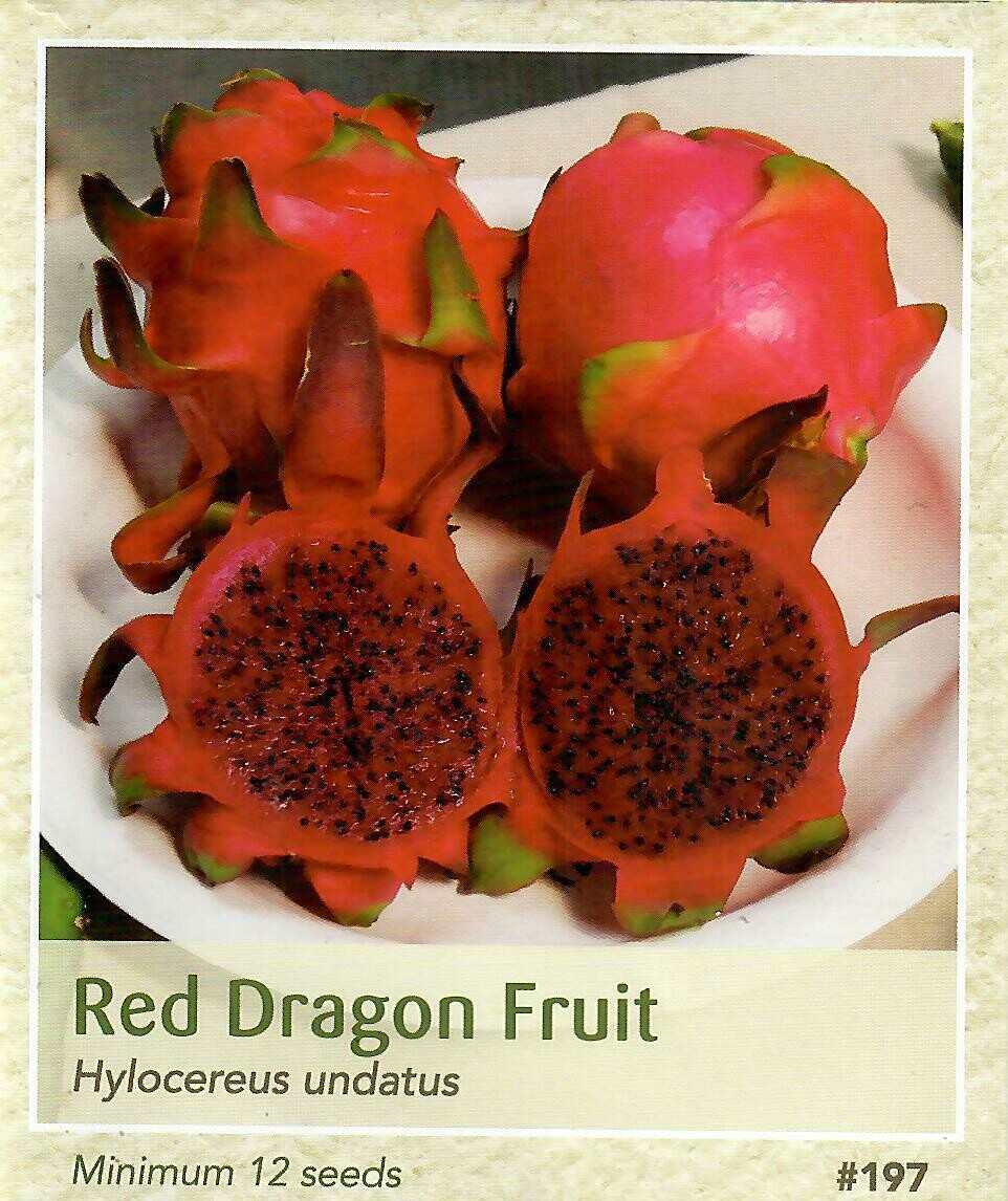 Red Dragon Fruit Seed