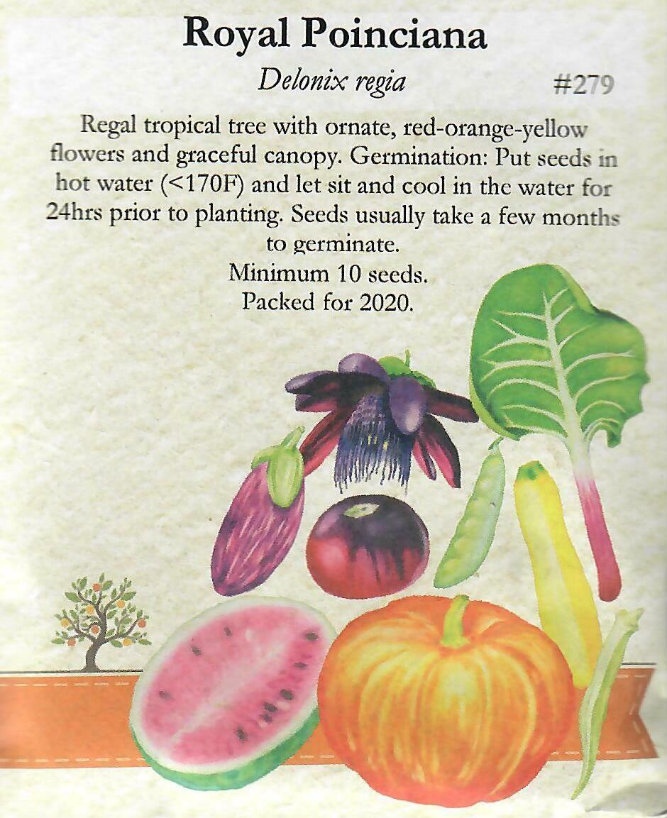 Royal Poinciana Seed