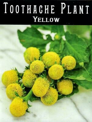 Toothache Plant - Yellow Seed