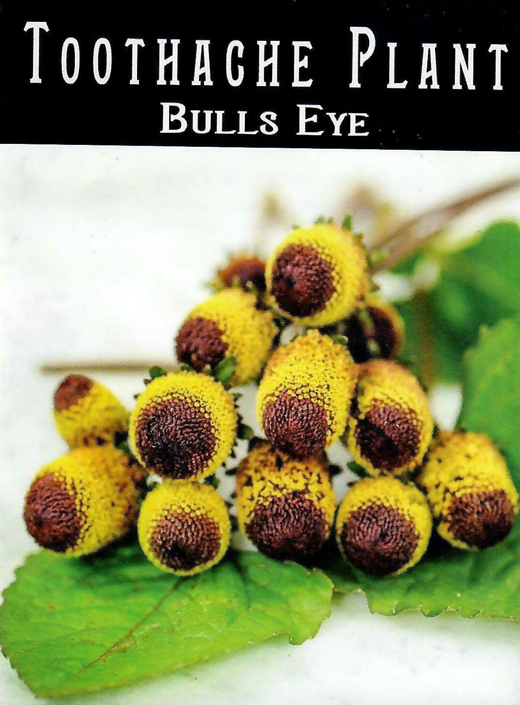Toothache Plant - Bullseye Seed