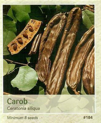 Carob Seed