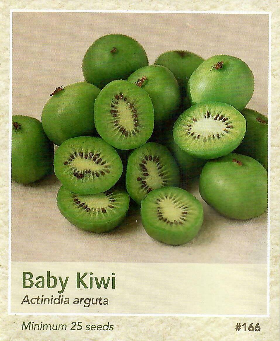 Baby Kiwi Seed