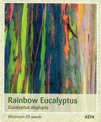 Rainbow Eucalyptus Seed