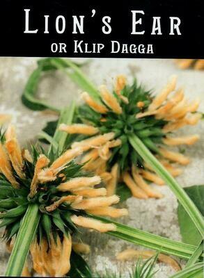 Lion's Ear or Lip Dagga Seed