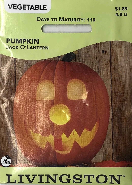 PUMPKIN - JACK O'LANTERN