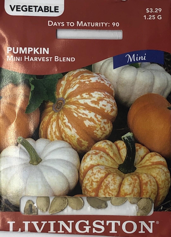 PUMPKIN - HARVEST BLEND