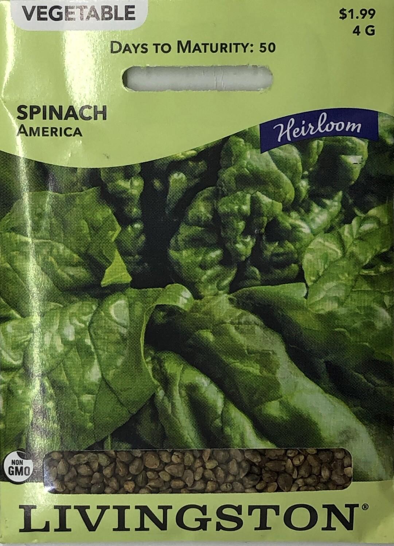 SPINACH - HEIRLOOM - AMERICA