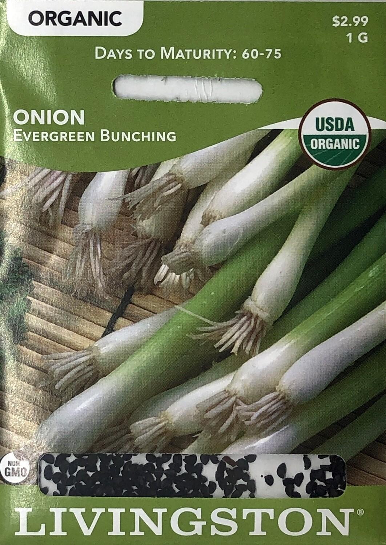 ONION - ORGANIC - EVERGREEN BUNCHING