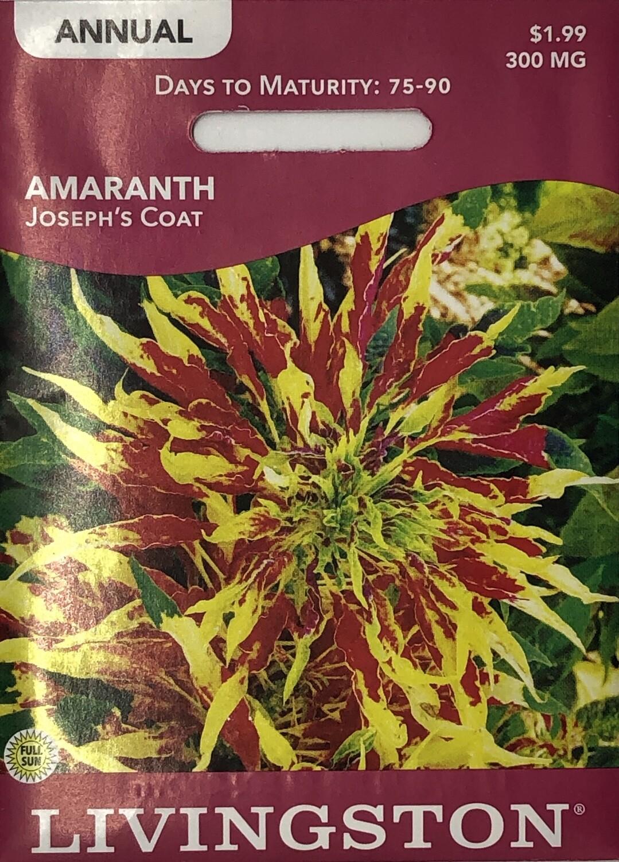 AMARANTH - JOSEPH'S COAT