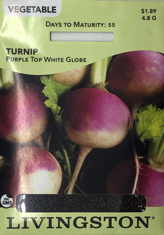 TURNIP - PURPLE TOP WHITE GLOBE