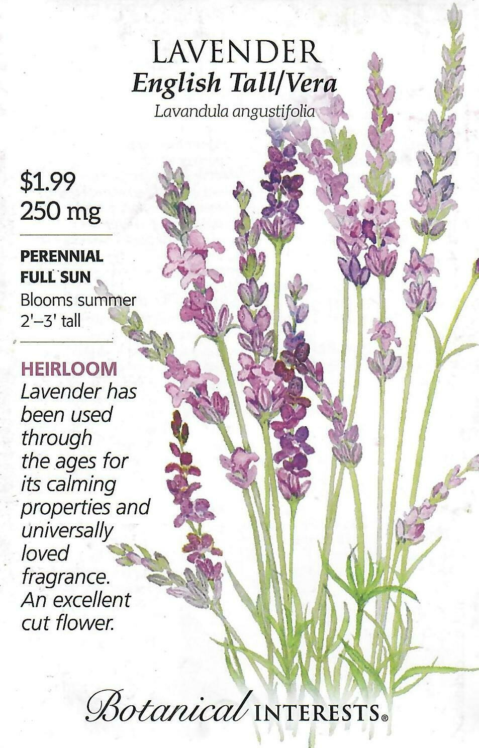 Lavender Tall English Vera Botanical Interests