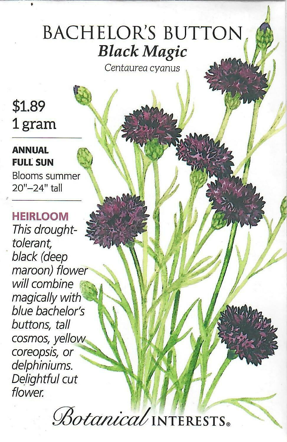 Bachelor Button Black Magic Botanical Interests