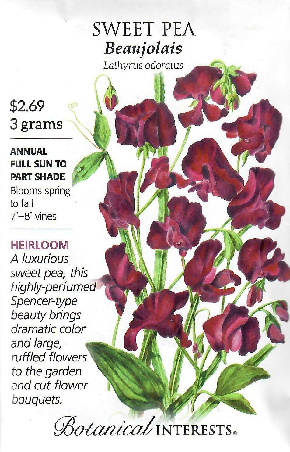 Sweet Pea Beaujolais Botanical Interests