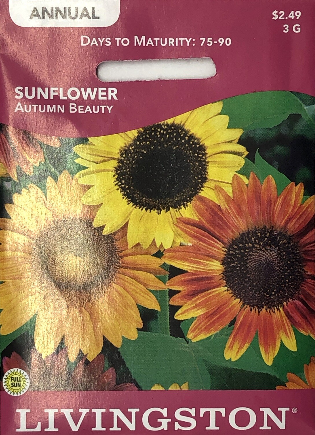 SUNFLOWER - AUTUMN BEAUTY