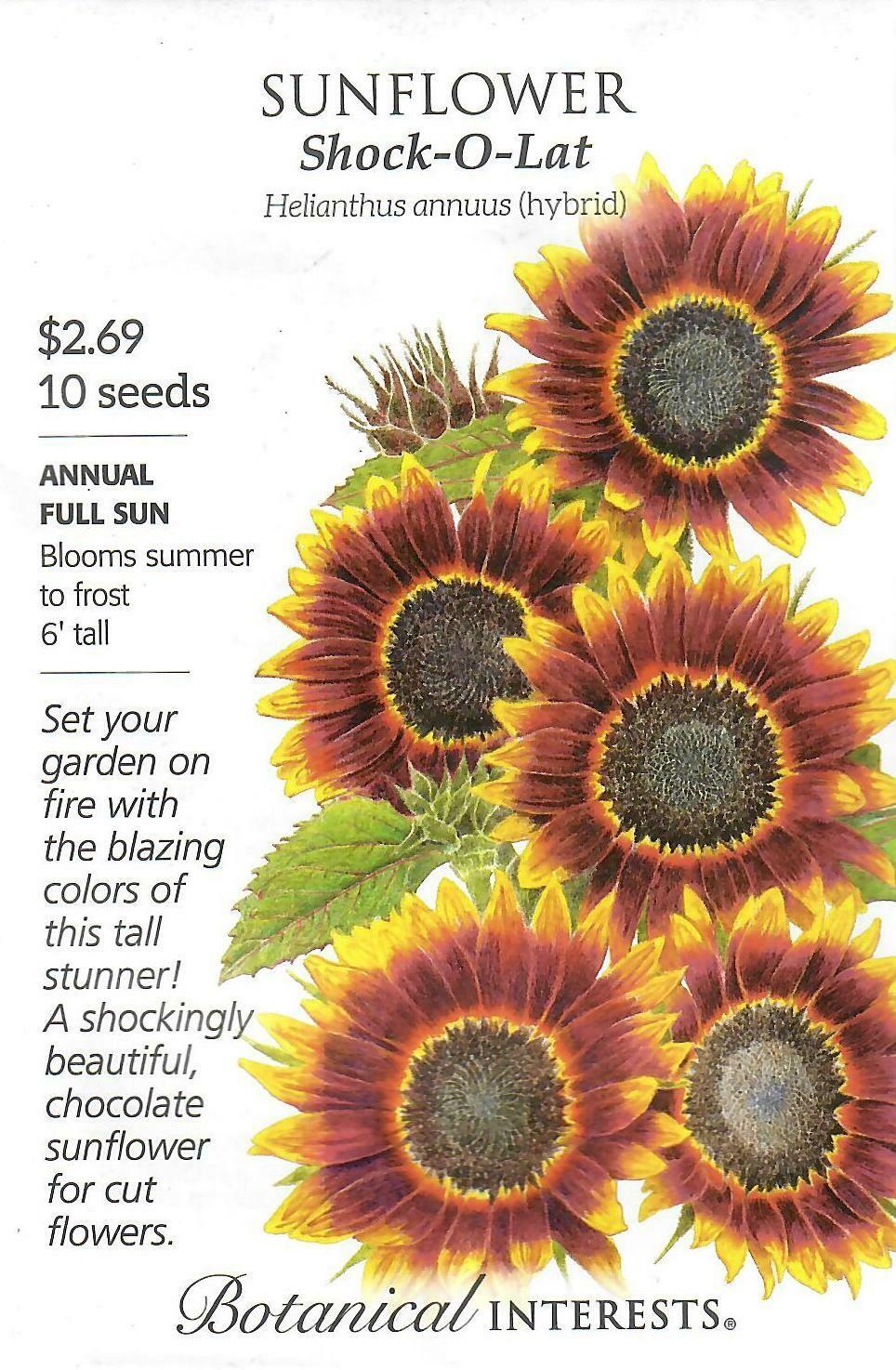 Sunflower Shock O Lat Botanical Interests