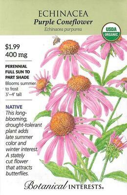 Echinacea Purple Coneflower Org Botanical Interests