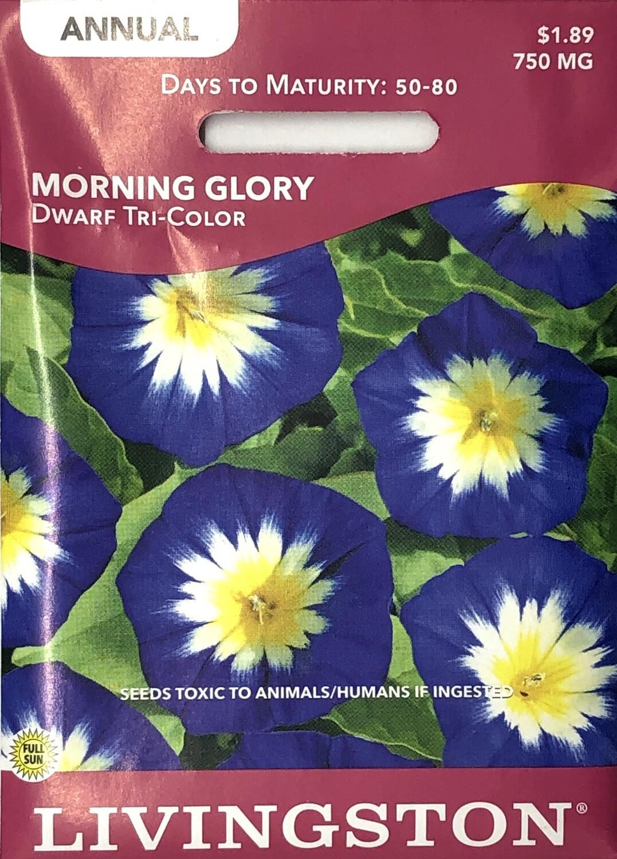 MORNING GLORY - DWARF TRI-COLOR