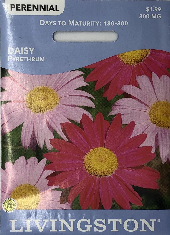 DAISY - PYRETHRUM