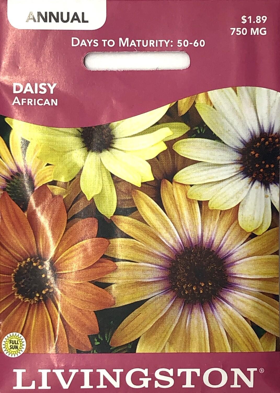 DAISY - AFRICAN