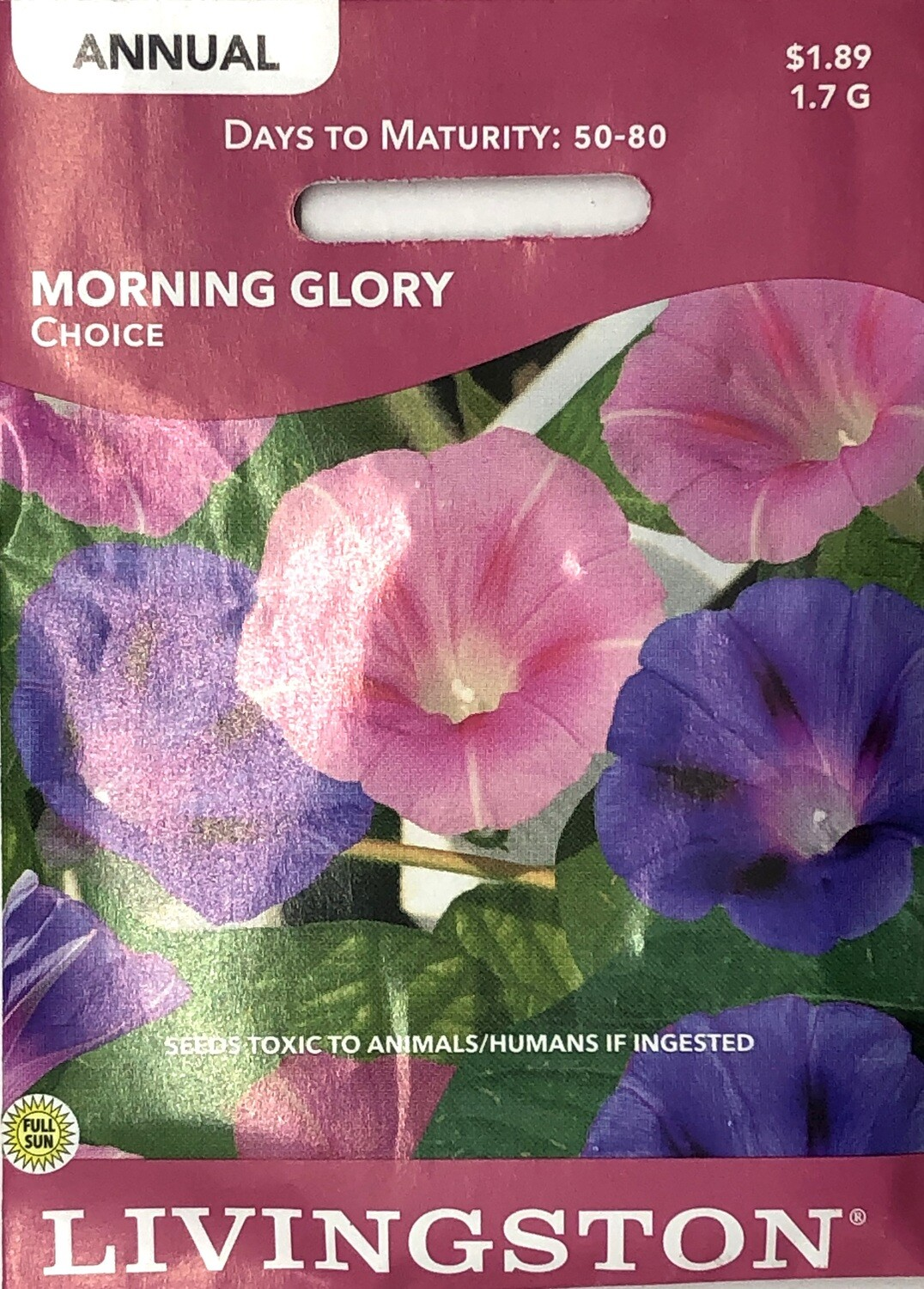 MORNING GLORY - CHOICE