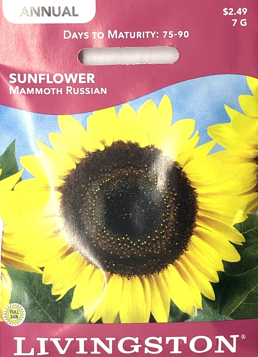 SUNFLOWER - MAMMOTH RUSSIAN