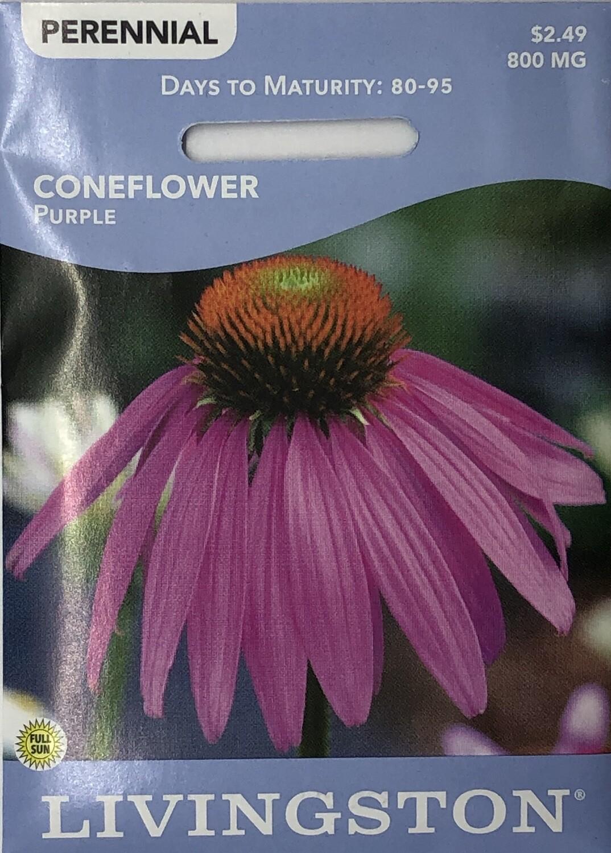 CONEFLOWER - PURPLE